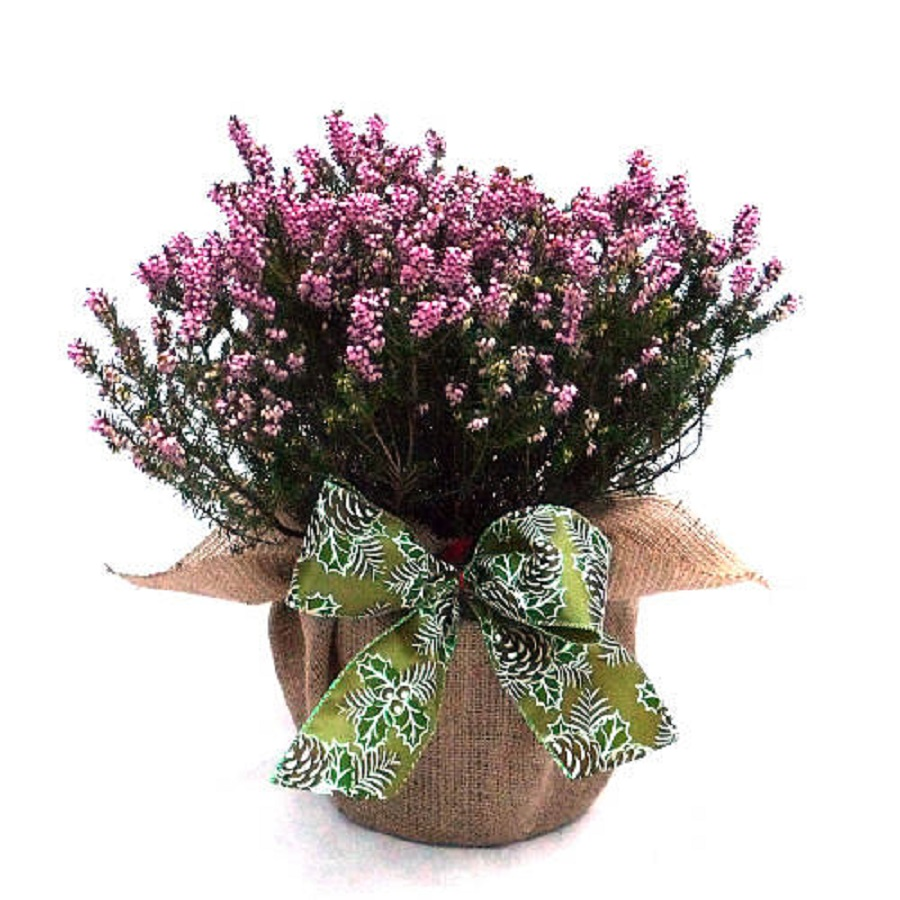 plants are also amazing as wedding gift for parents