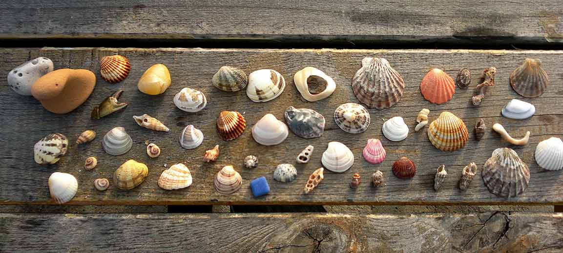 seashells for wedding decoration